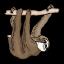 Sloth 1.5 Icon